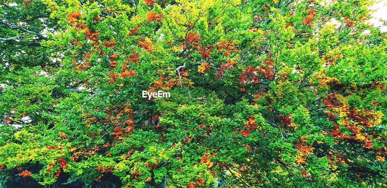 plant, growth, green color, beauty in nature, no people, nature, day, tranquility, land, outdoors, full frame, freshness, high angle view, flowering plant, flower, leaf, field, plant part, tree, foliage