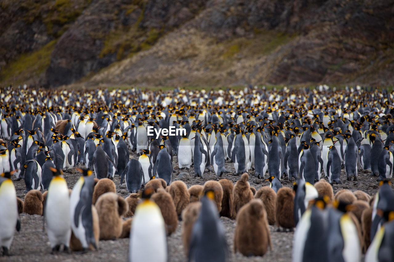 Penguins At Beach