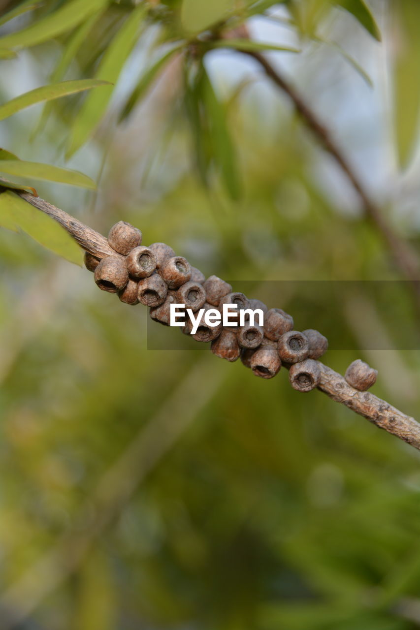 Close-up of twig on branch