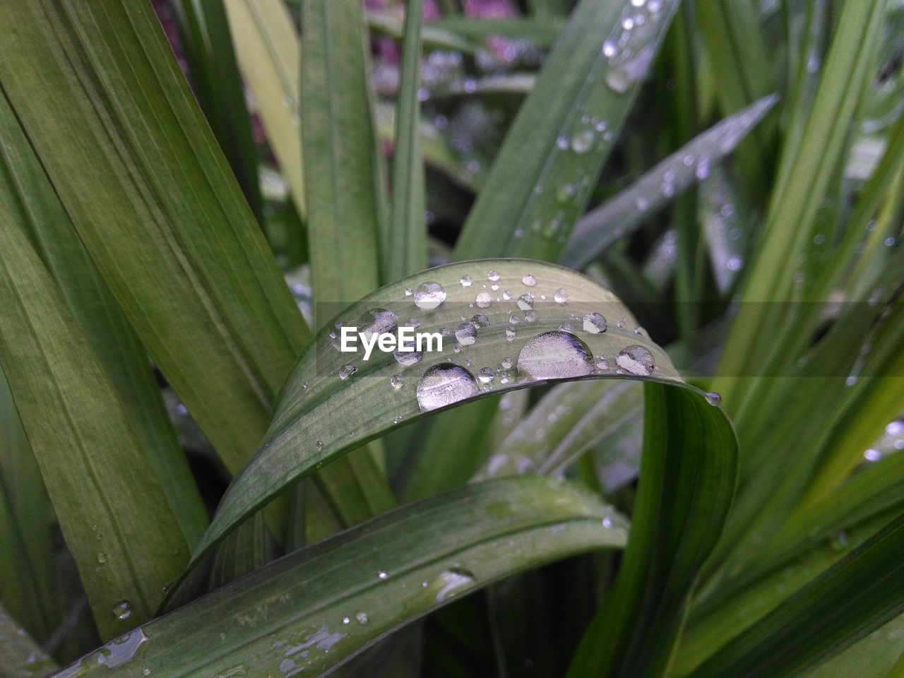 plant, water, wet, growth, drop, leaf, plant part, close-up, green color, nature, beauty in nature, no people, blade of grass, day, freshness, grass, rain, outdoors, dew, raindrop, purity, rainy season