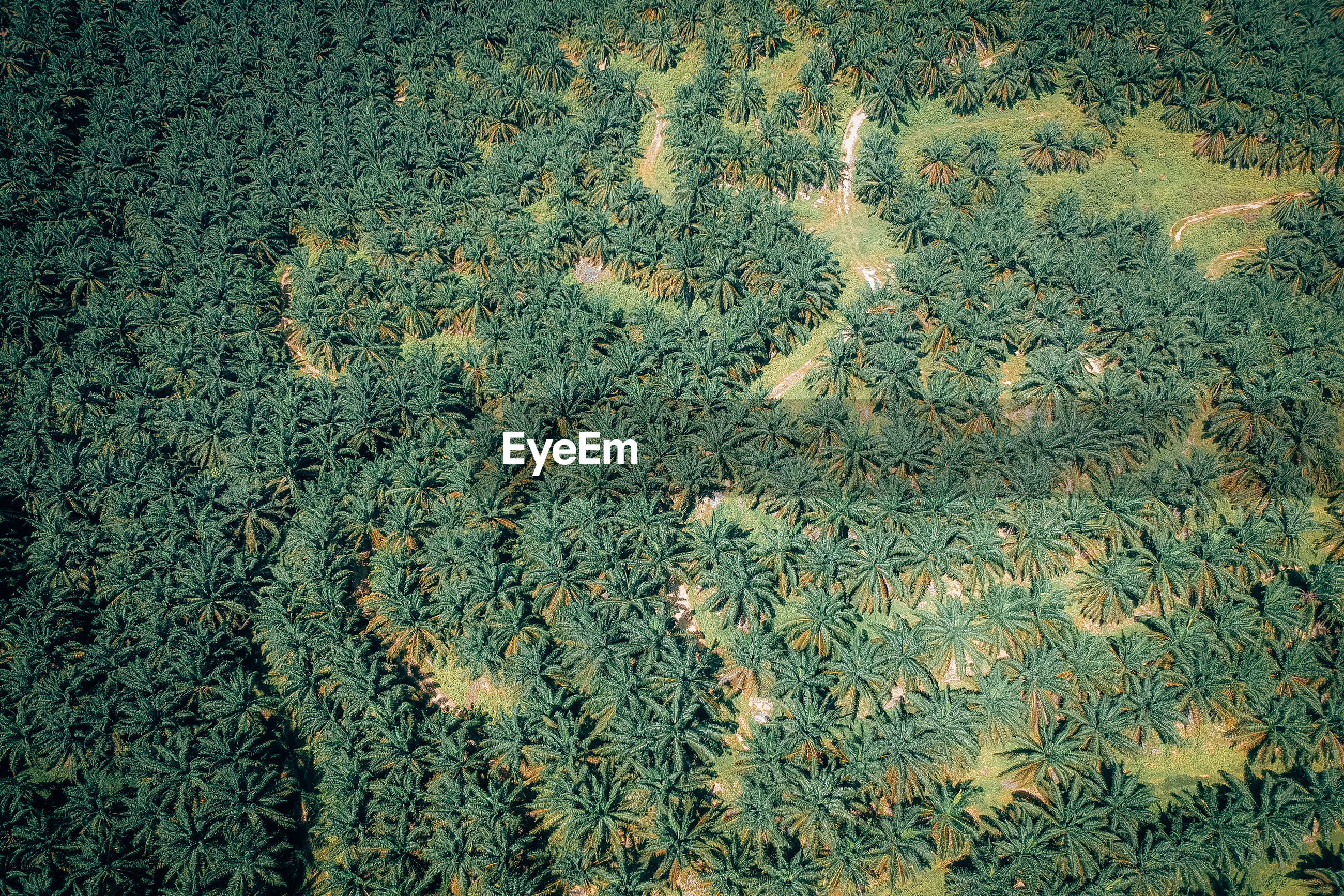 HIGH ANGLE VIEW OF PLANTS ON LAND