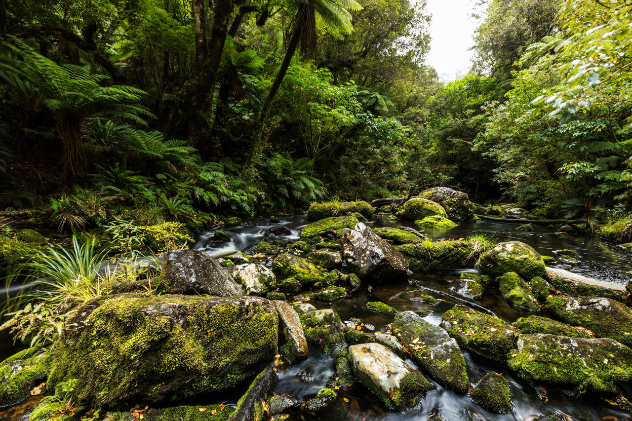 plant, tree, forest, green color, beauty in nature, water, rock, nature, growth, land, no people, day, rock - object, solid, tranquility, scenics - nature, moss, river, foliage, outdoors, flowing water, flowing, stream - flowing water, rainforest