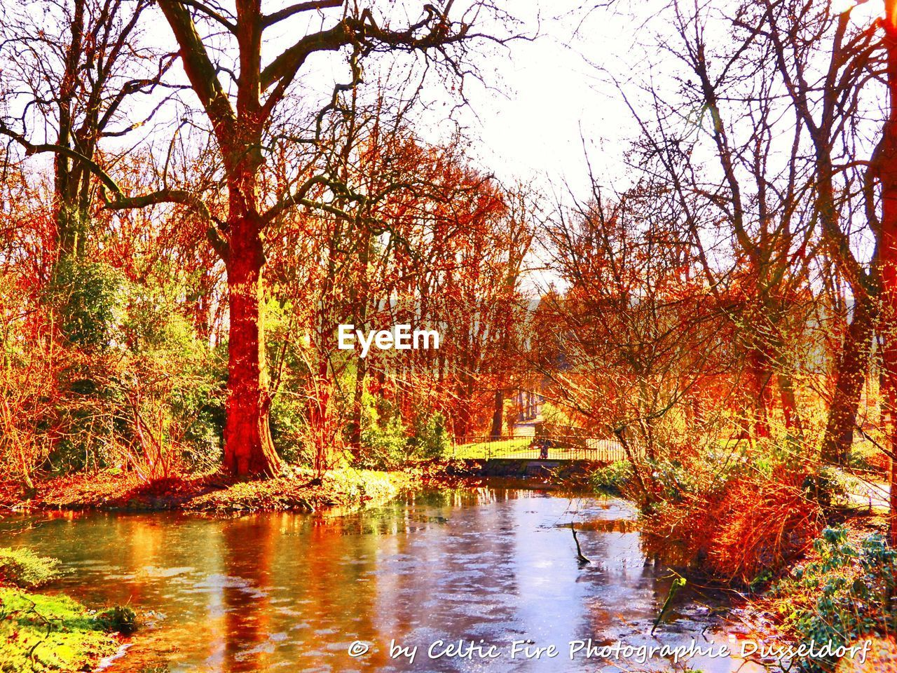tree, autumn, water, change, nature, tranquil scene, reflection, beauty in nature, leaf, tranquility, scenics, lake, no people, day, branch, outdoors, forest, growth, waterfront, bare tree, landscape, tree trunk, grass, sky