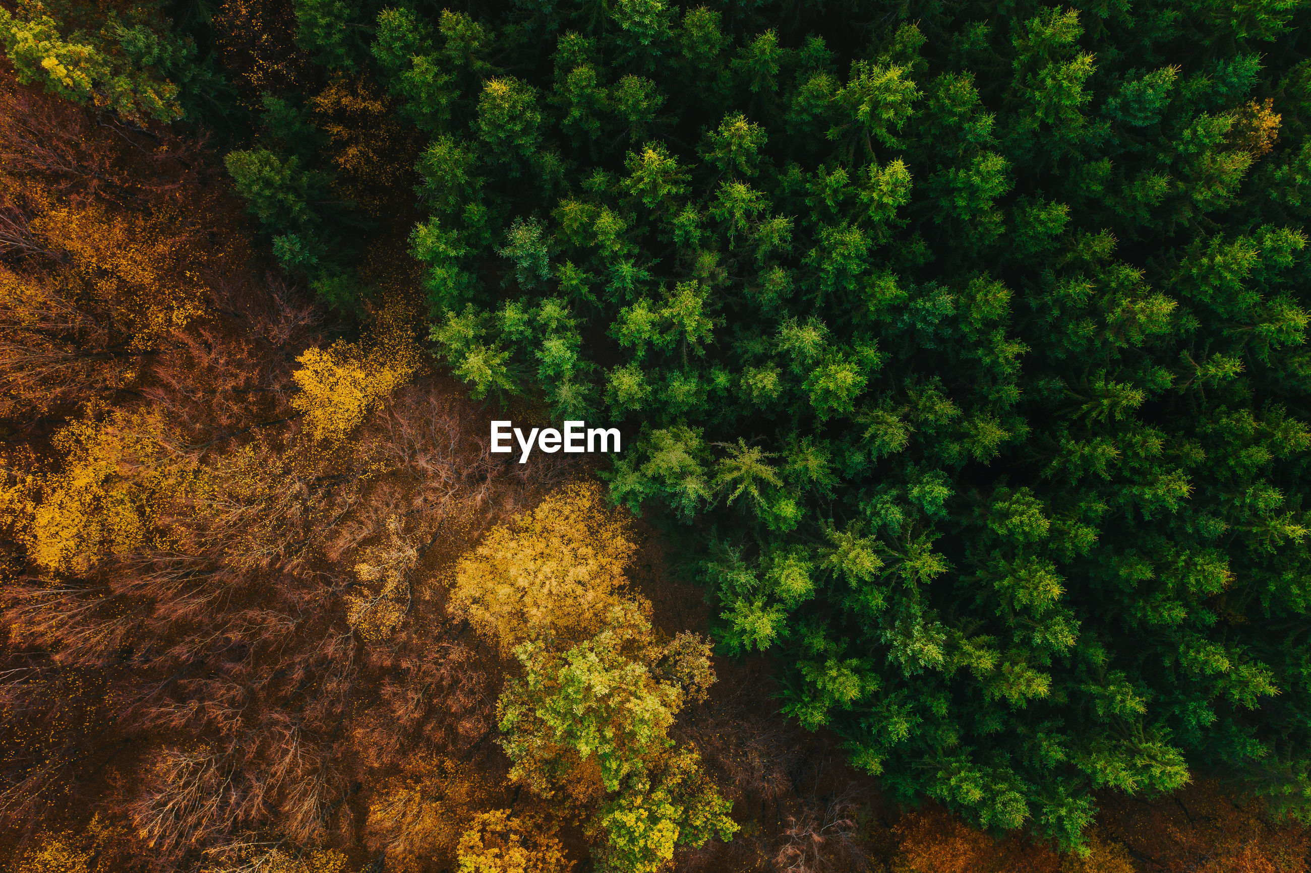Aerial view of trees growing in forest during autumn