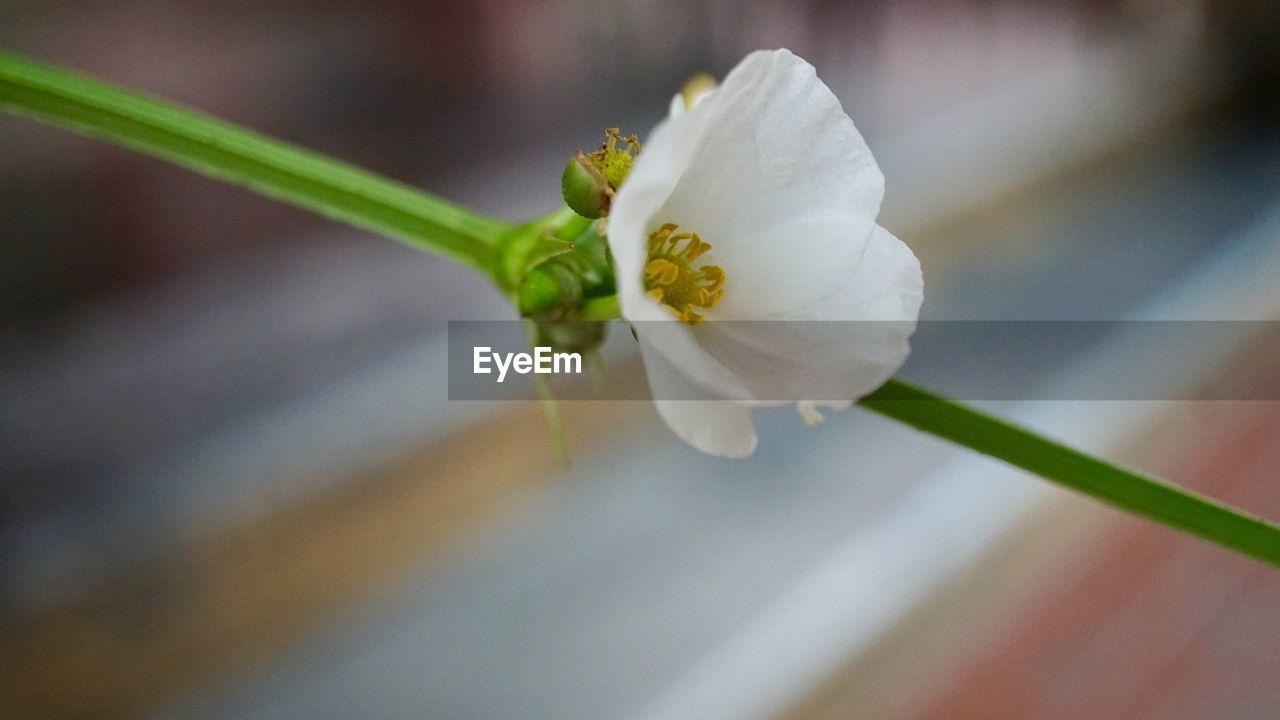 flower, flowering plant, beauty in nature, plant, freshness, fragility, vulnerability, growth, close-up, petal, white color, inflorescence, flower head, no people, nature, focus on foreground, selective focus, day, botany, outdoors, springtime, pollen, purity