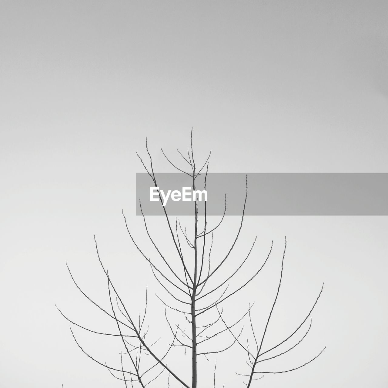 nature, clear sky, low angle view, copy space, branch, outdoors, beauty in nature, tranquility, no people, tree, day, sky