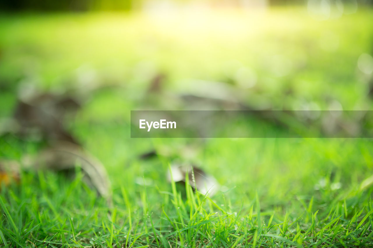 grass, green color, plant, field, selective focus, nature, growth, land, day, no people, outdoors, tranquility, close-up, focus on foreground, beauty in nature, sunlight, lawn, freshness, surface level, fragility