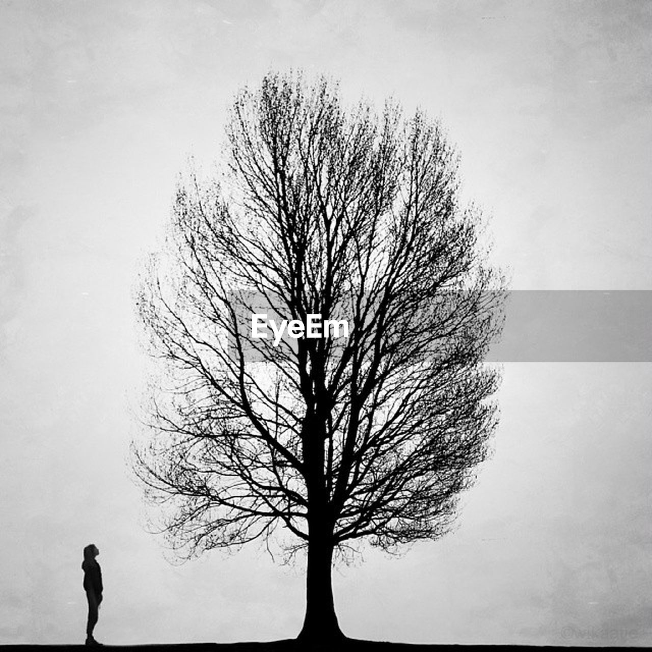 bare tree, tree, tree trunk, lone, branch, isolated, solitude, tranquility, silhouette, beauty in nature, tranquil scene, nature, landscape, outdoors, sky, day, clear sky, one person, people