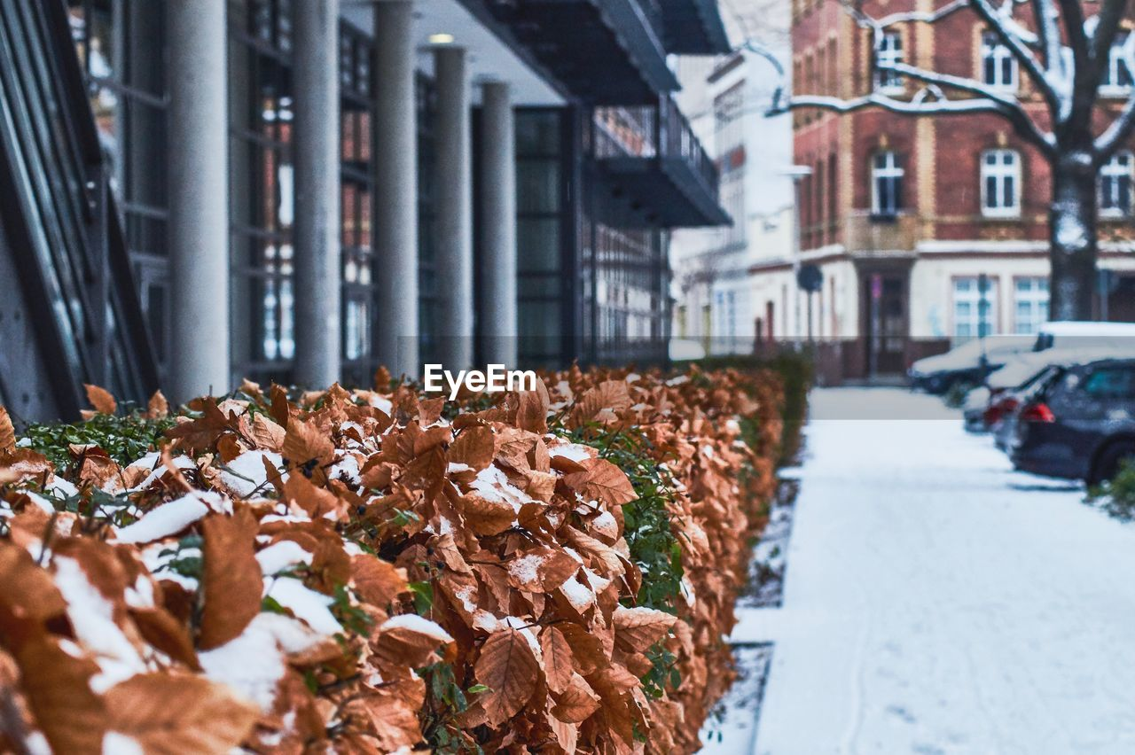 architecture, building exterior, built structure, transportation, day, mode of transportation, city, motor vehicle, car, building, street, land vehicle, focus on foreground, snow, nature, no people, cold temperature, selective focus, winter
