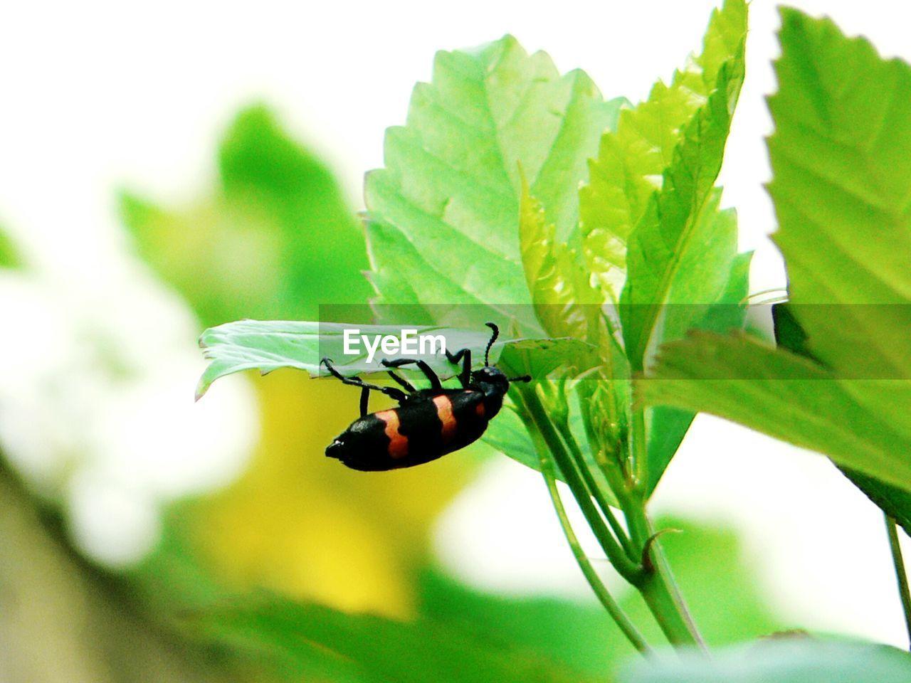 Close-Up Of Bug On Leaf