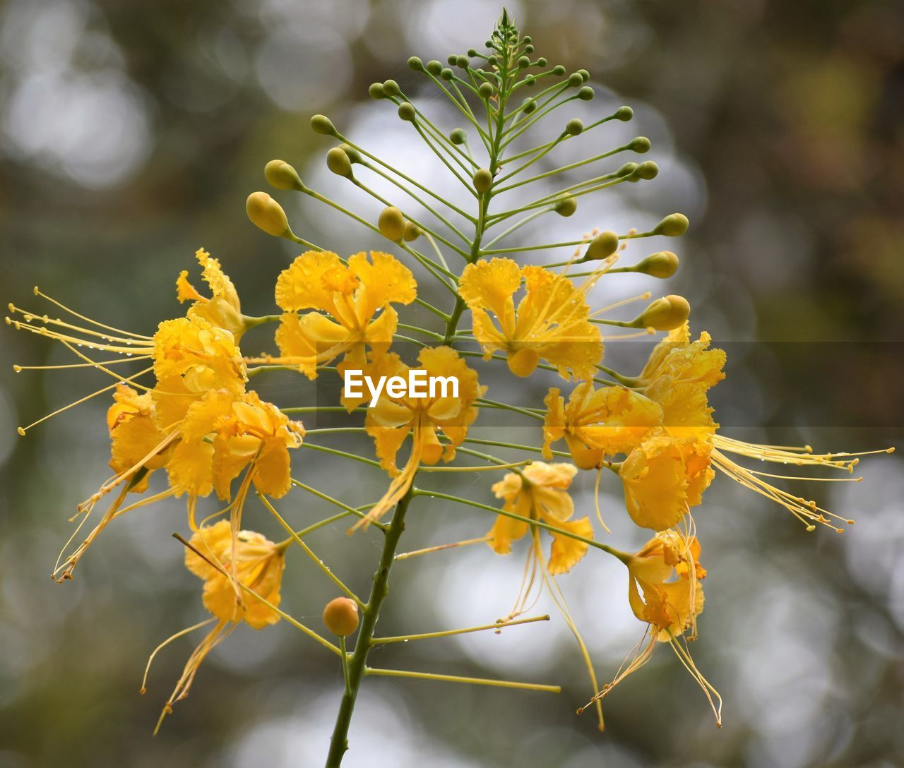 flower, yellow, fragility, growth, nature, beauty in nature, petal, freshness, plant, focus on foreground, outdoors, day, close-up, no people, flower head