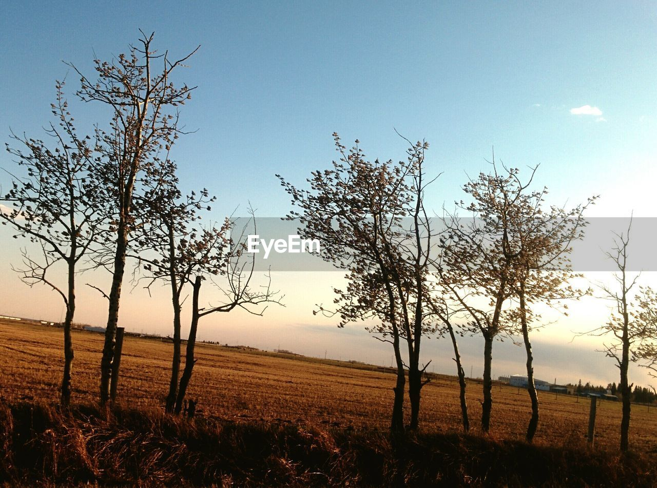 Bare trees on grassy field against clear sky