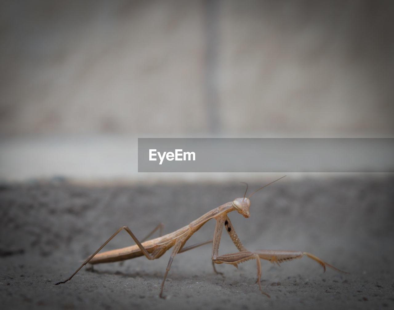 Close-Up Of Praying Mantis On Field
