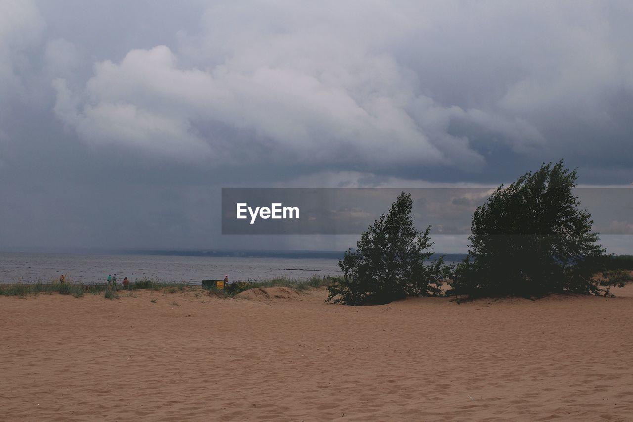 Plants growing at sandy beach against cloudy sky