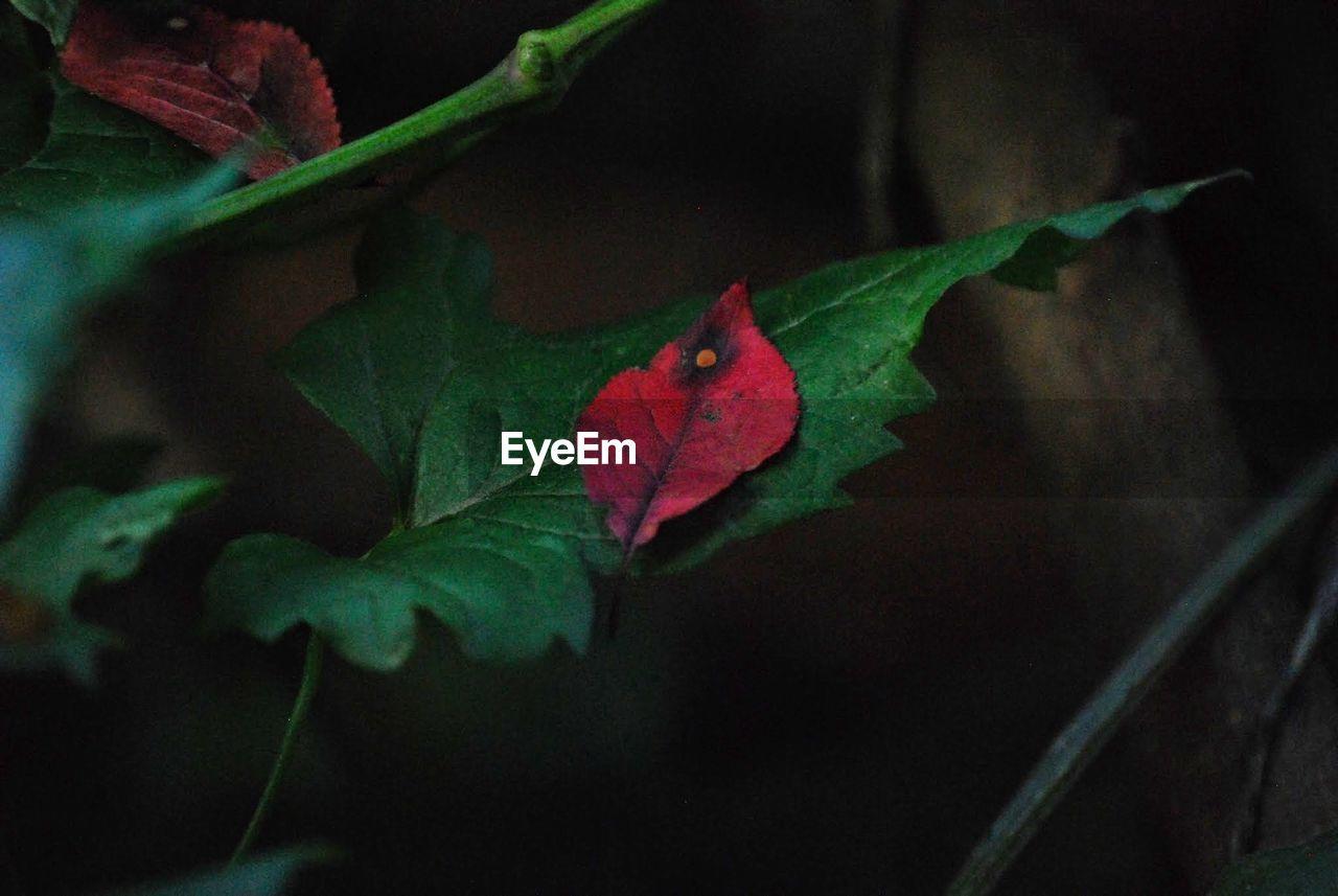 Autumn leaf on fresh plant