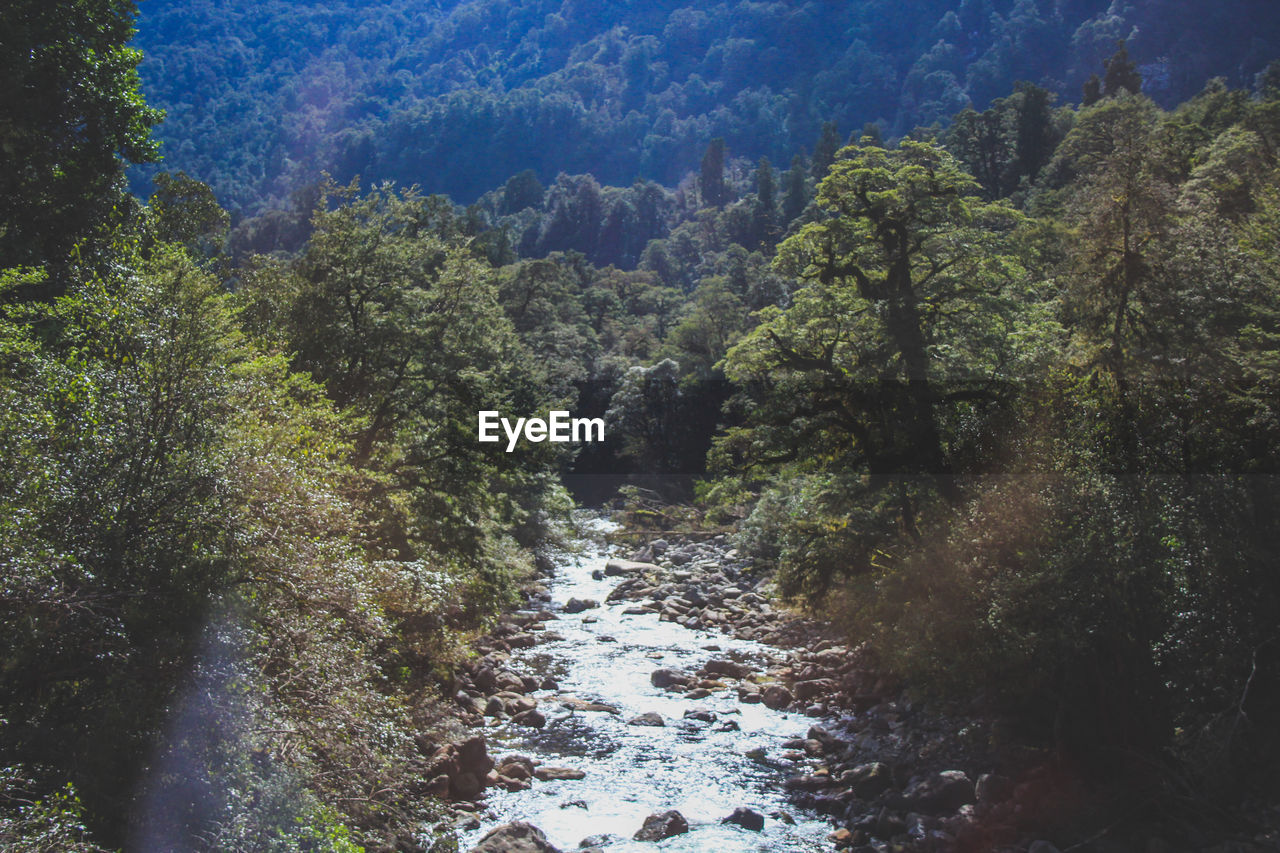 tree, water, plant, forest, beauty in nature, tranquility, no people, nature, growth, day, tranquil scene, scenics - nature, land, river, non-urban scene, outdoors, flowing water, rock, environment, flowing, marine