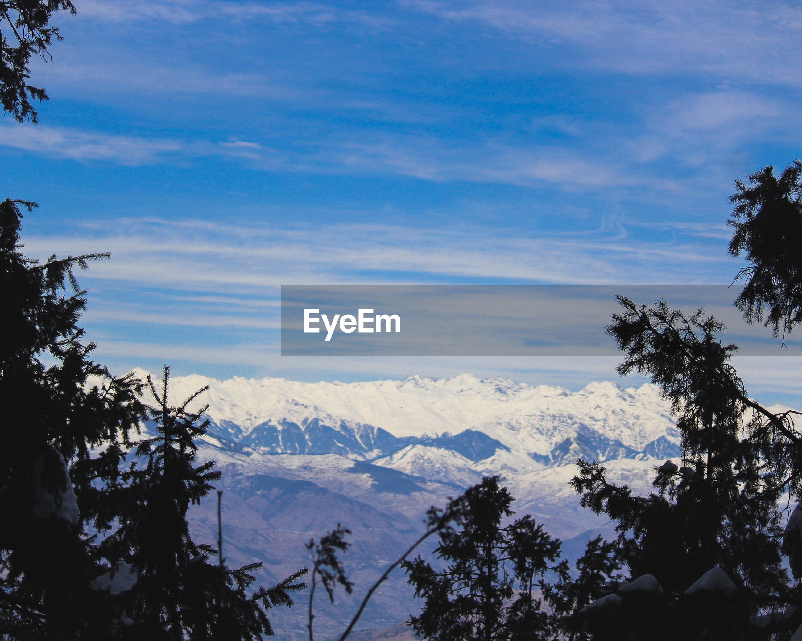 TREES ON SNOWCAPPED MOUNTAINS AGAINST SKY