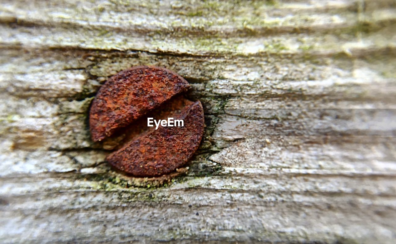 Close-Up Of Rusty Nail On Wooden Plank