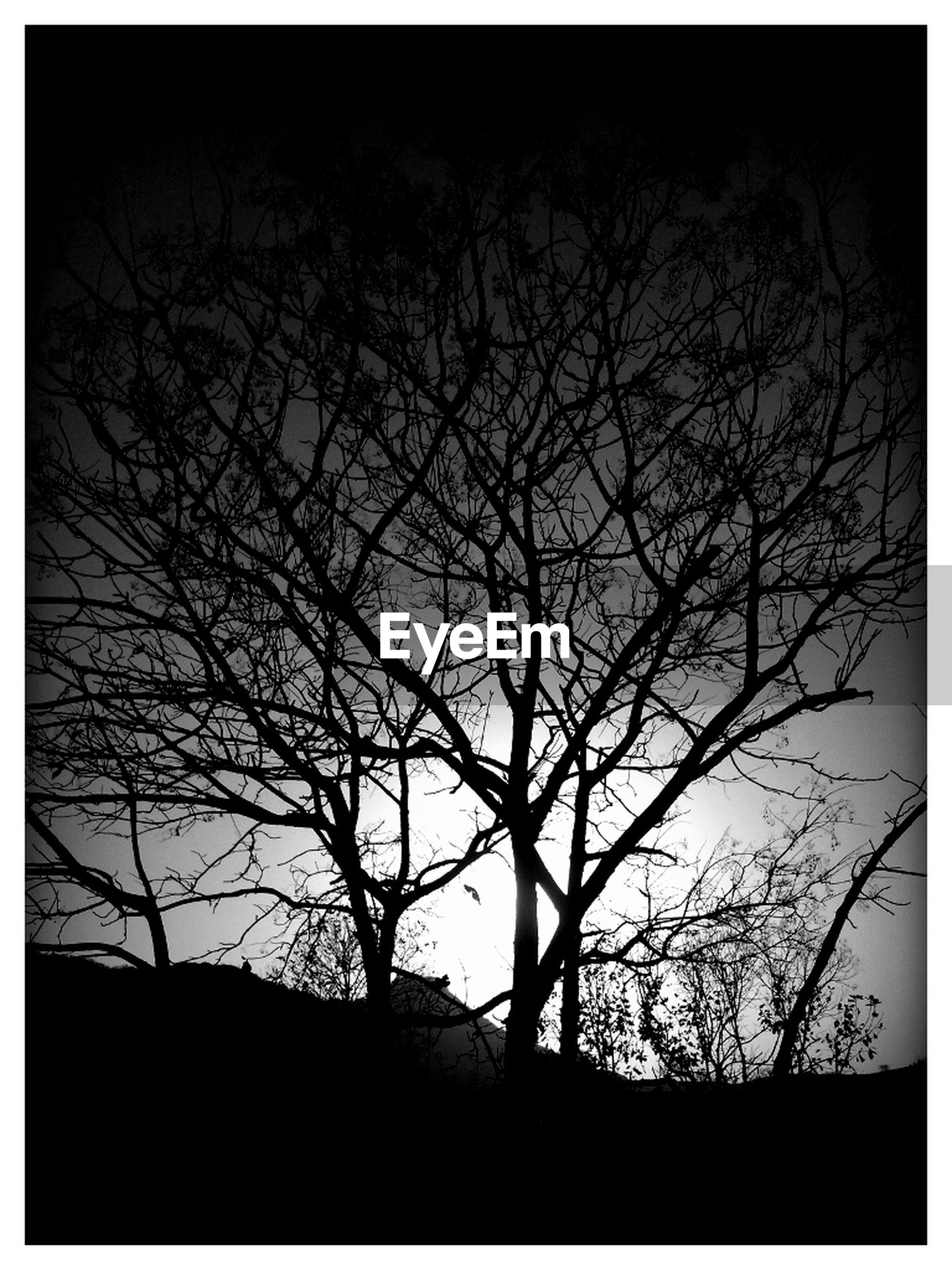bare tree, transfer print, silhouette, tree, branch, low angle view, auto post production filter, tranquility, clear sky, nature, sky, beauty in nature, dusk, scenics, dark, tranquil scene, outdoors, no people, vignette, copy space