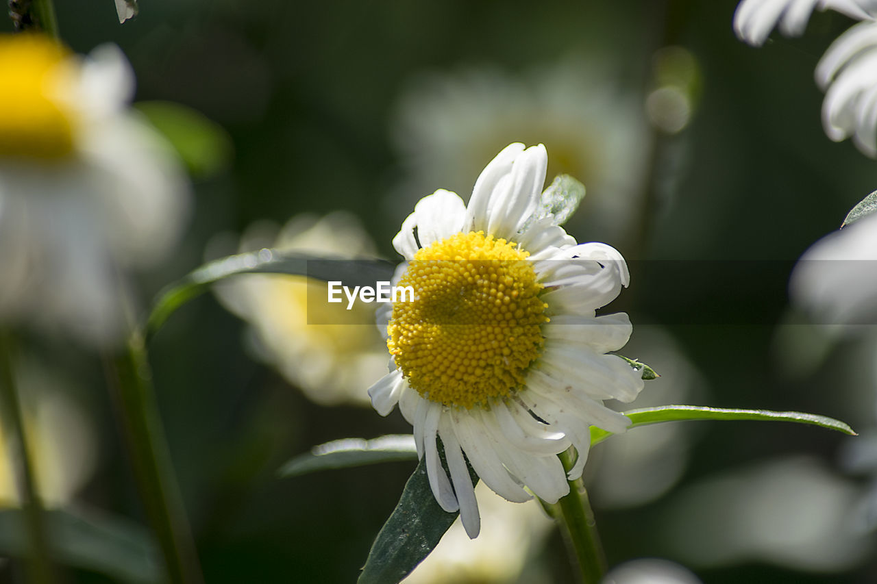 flower, nature, growth, beauty in nature, freshness, fragility, petal, plant, day, no people, outdoors, yellow, flower head, blooming, close-up