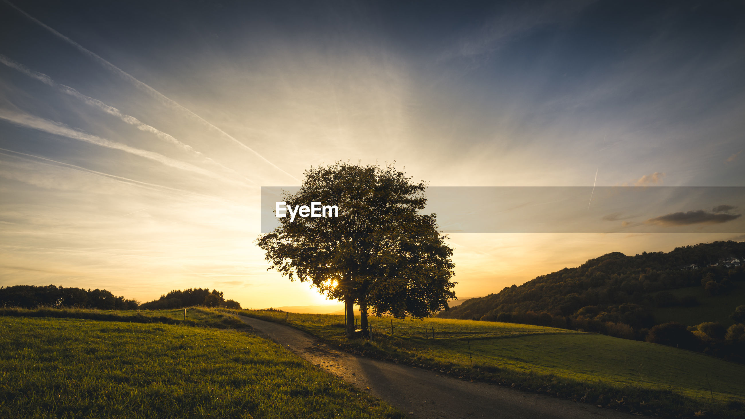 VIEW OF TREE ON LANDSCAPE AGAINST SKY