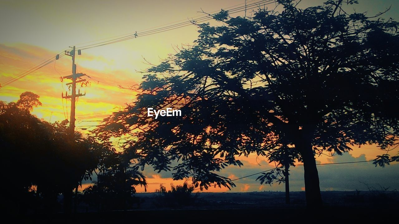 tree, cable, power line, sunset, silhouette, electricity pylon, electricity, sky, no people, nature, power supply, outdoors, growth, beauty in nature, scenics, telephone line, technology, day