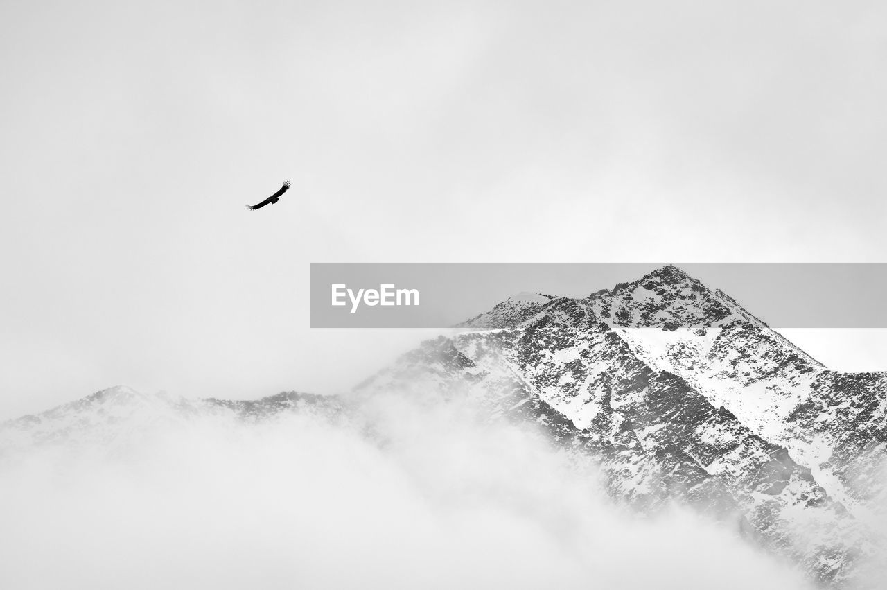 sky, flying, animal, mountain, animal themes, vertebrate, beauty in nature, scenics - nature, bird, animal wildlife, animals in the wild, nature, tranquil scene, one animal, fog, day, cold temperature, winter, no people, outdoors, snowcapped mountain, mountain peak