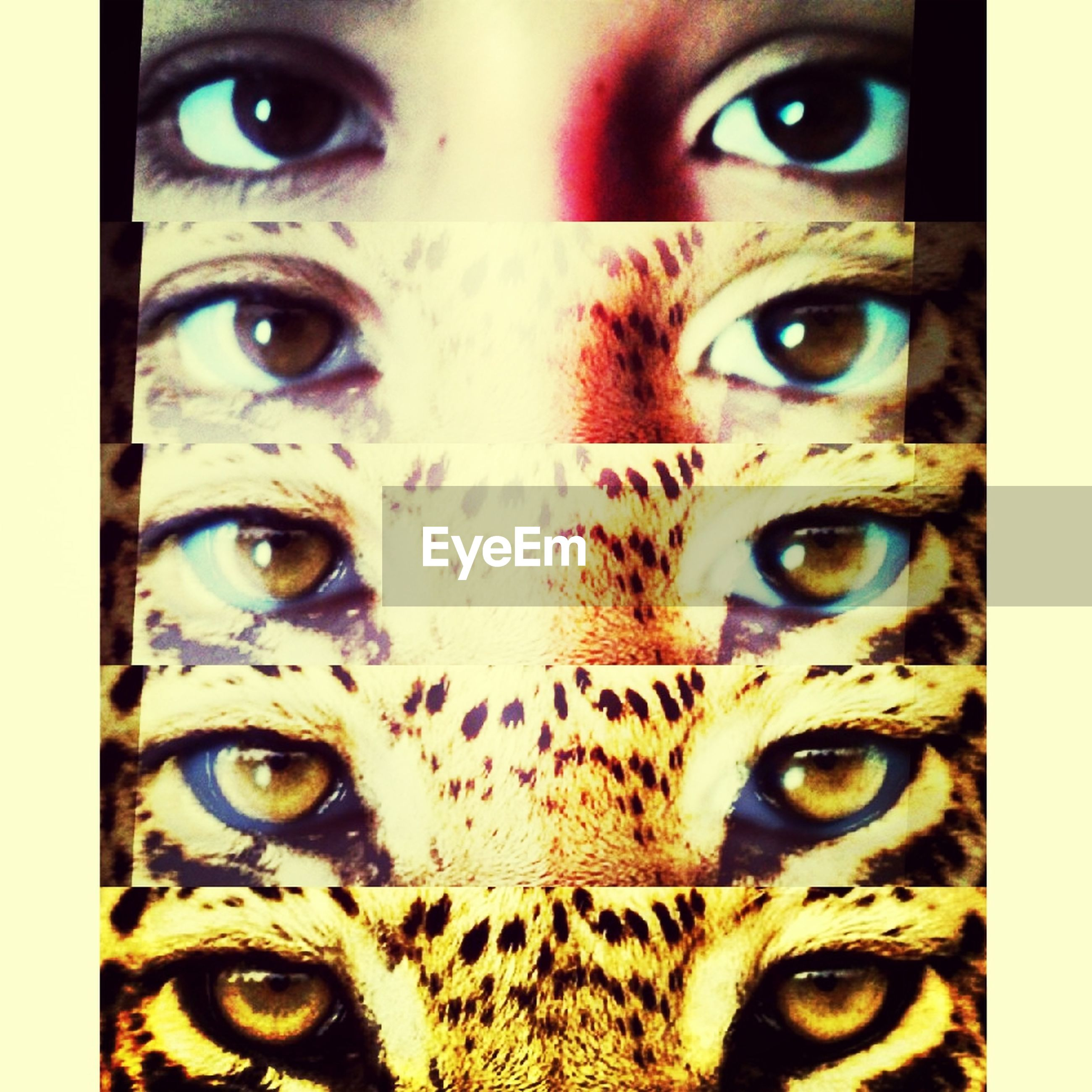 animal themes, one animal, close-up, portrait, animal eye, looking at camera, animal head, full frame, animal body part, pets, backgrounds, indoors, domestic animals, cat, part of, domestic cat, mammal, auto post production filter, transfer print, detail