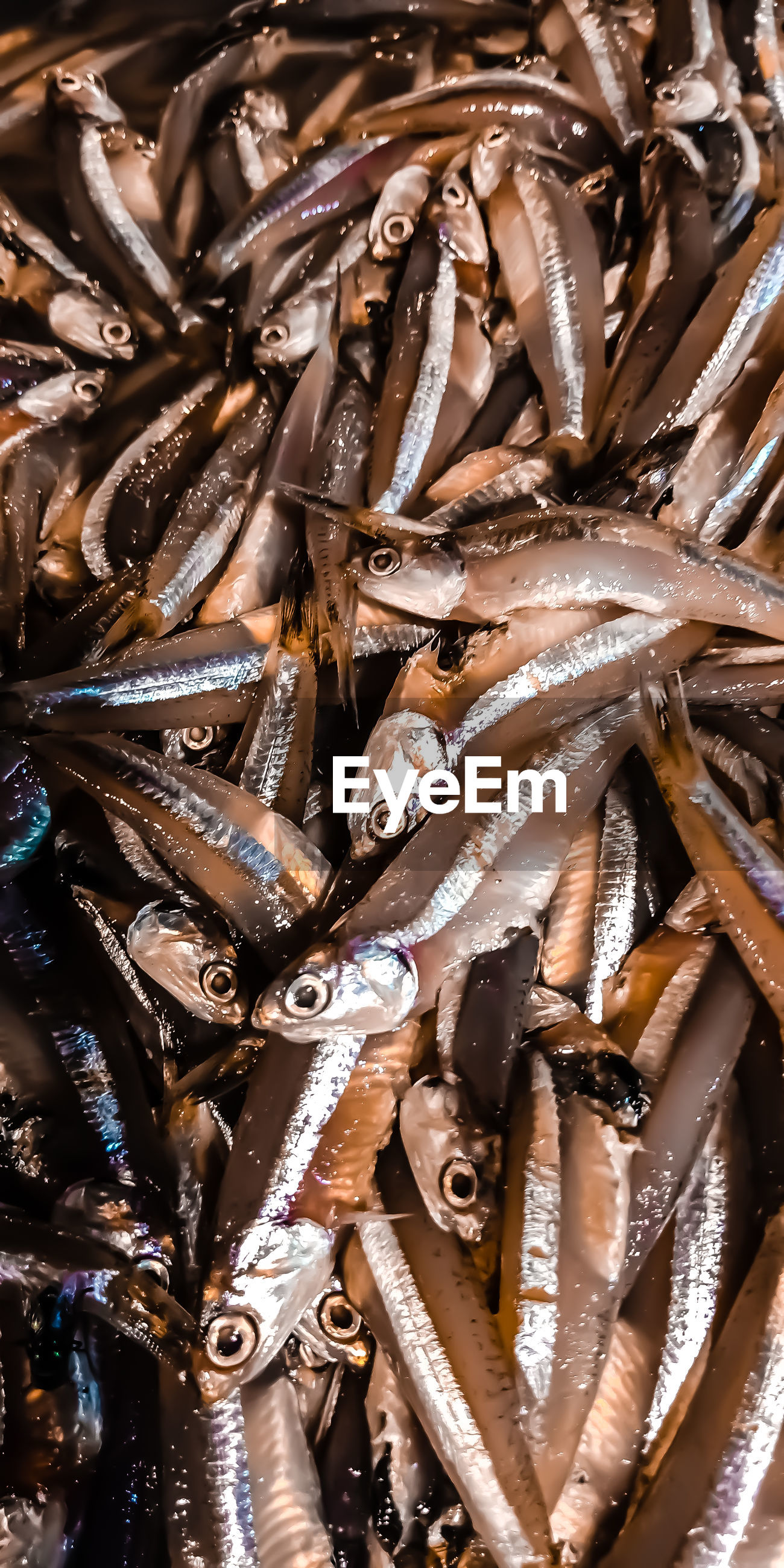 Full frame shot of fish for sale