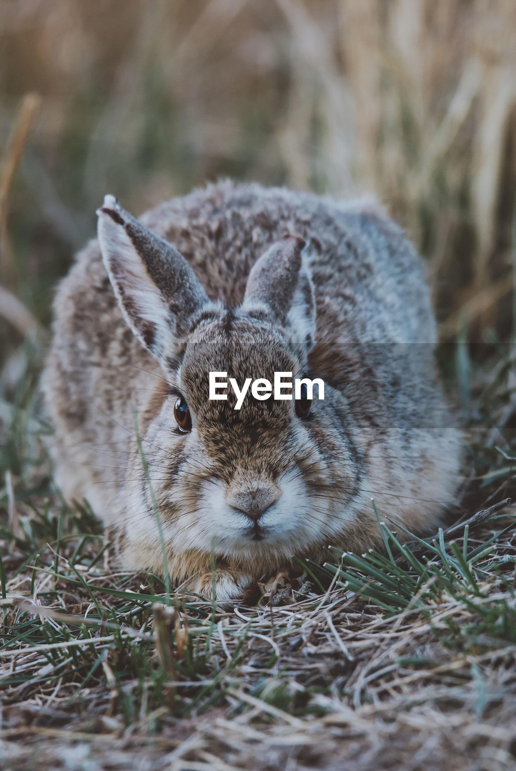 Close of rabbit on field