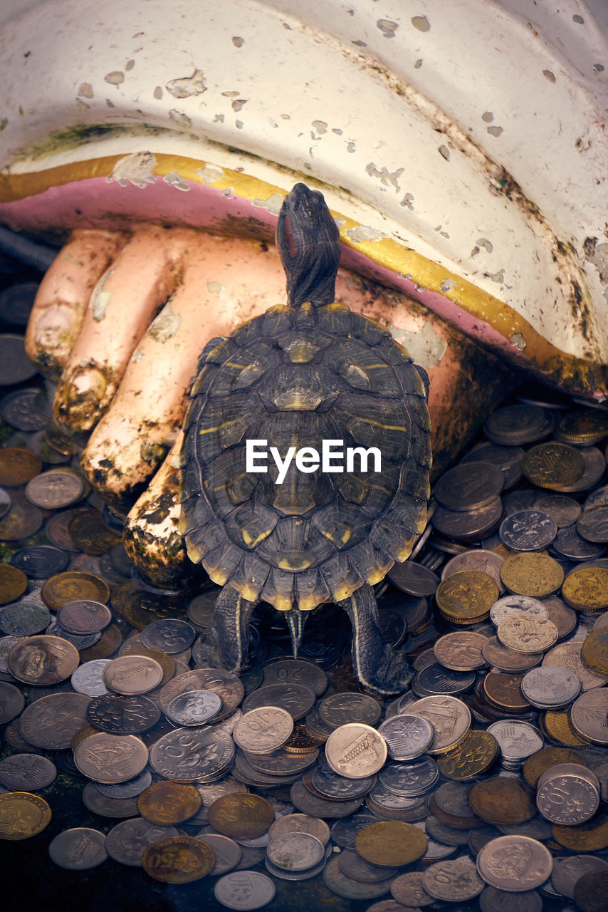 turtle, reptile, animal, animal themes, animal wildlife, tortoise, vertebrate, animals in the wild, animal shell, high angle view, one animal, shell, day, nature, close-up, no people, outdoors, full length