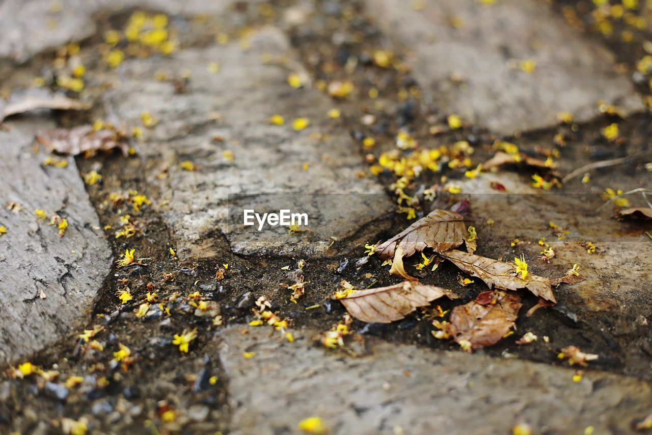 leaf, autumn, change, dry, no people, nature, fallen, outdoors, selective focus, day, fragility, close-up, beauty in nature, tree