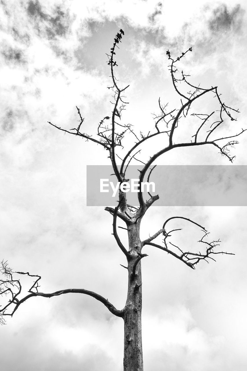 low angle view, sky, cloud - sky, day, outdoors, bare tree, branch, tree, nature, no people, animals in the wild, beauty in nature, bird, animal themes