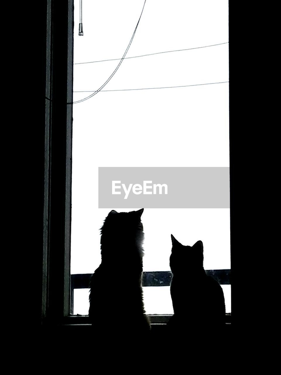 domestic cat, pets, domestic animals, feline, cat, sitting, window, mammal, animal themes, one animal, silhouette, indoors, no people, day, clear sky