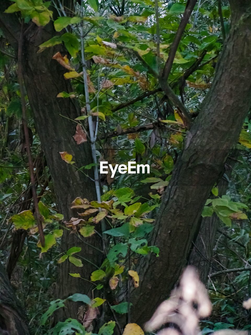 leaf, tree trunk, tree, growth, day, nature, branch, outdoors, close-up, no people