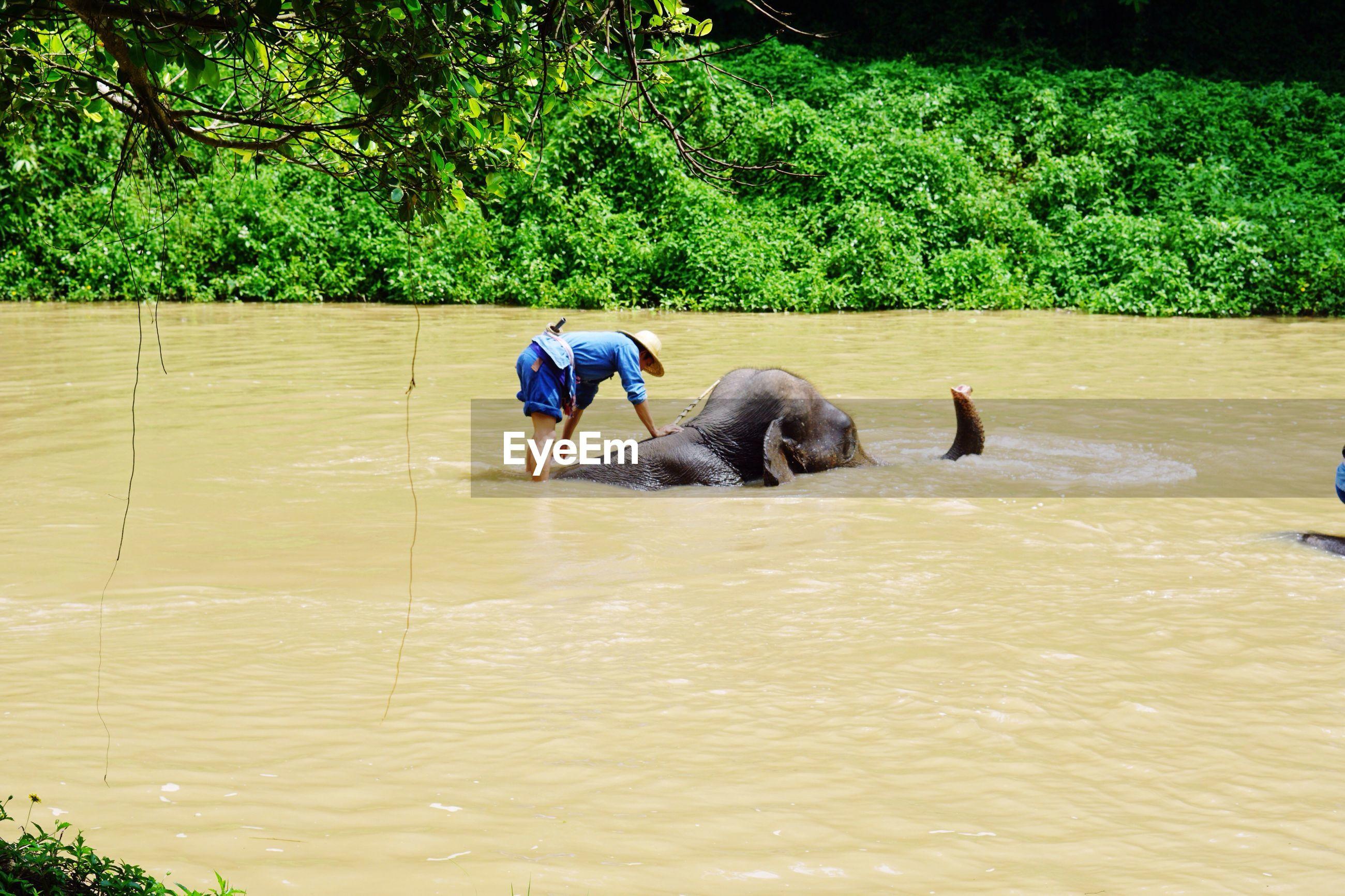 REAR VIEW OF MEN IN WATER