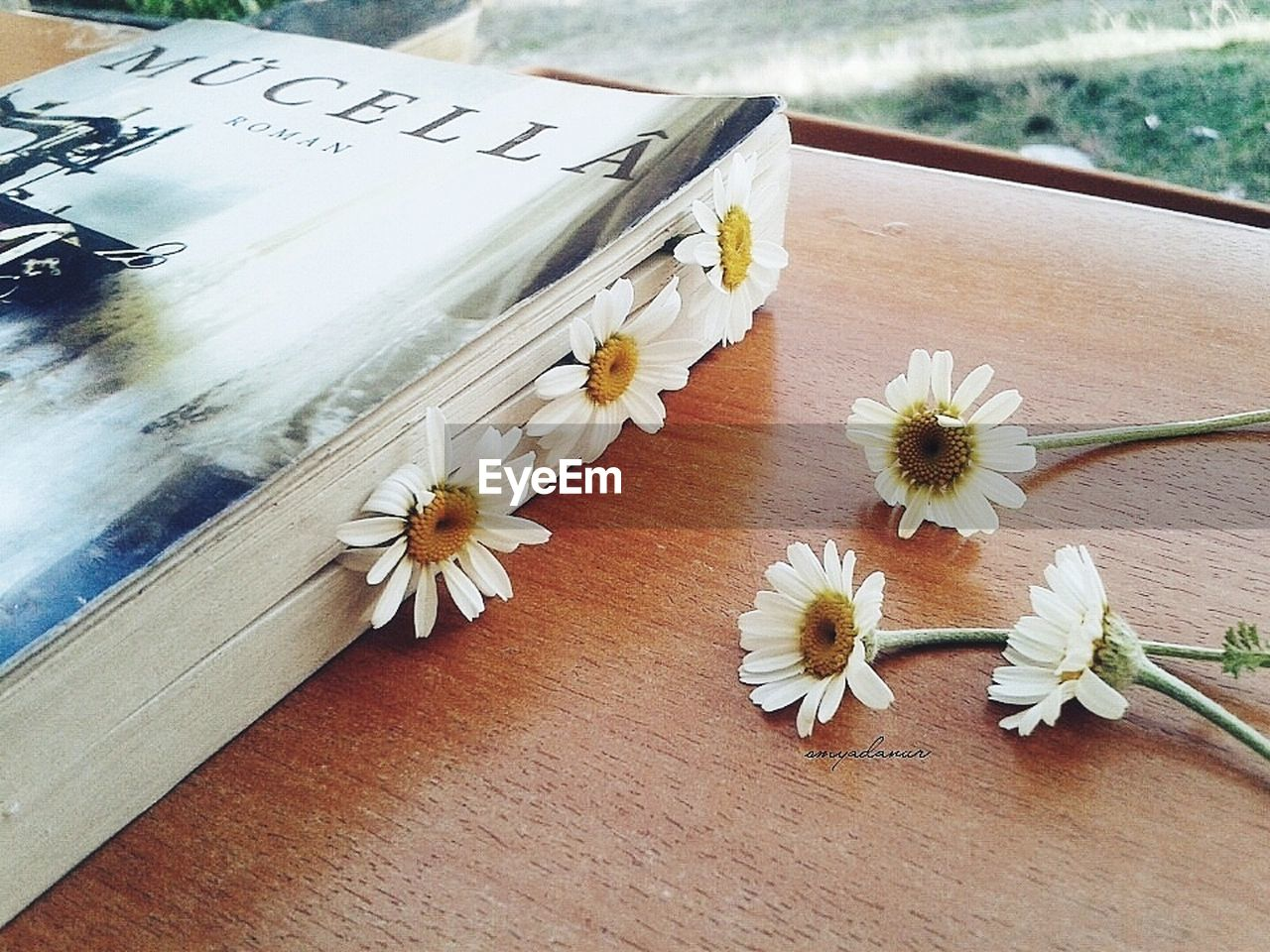 flower, text, table, no people, close-up, flower head, day, fragility, indoors, nature, freshness