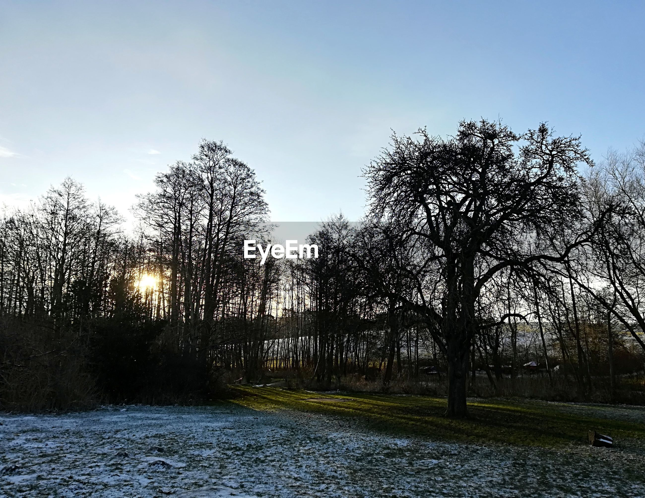 BARE TREES ON RIVERBANK AGAINST CLEAR SKY DURING WINTER