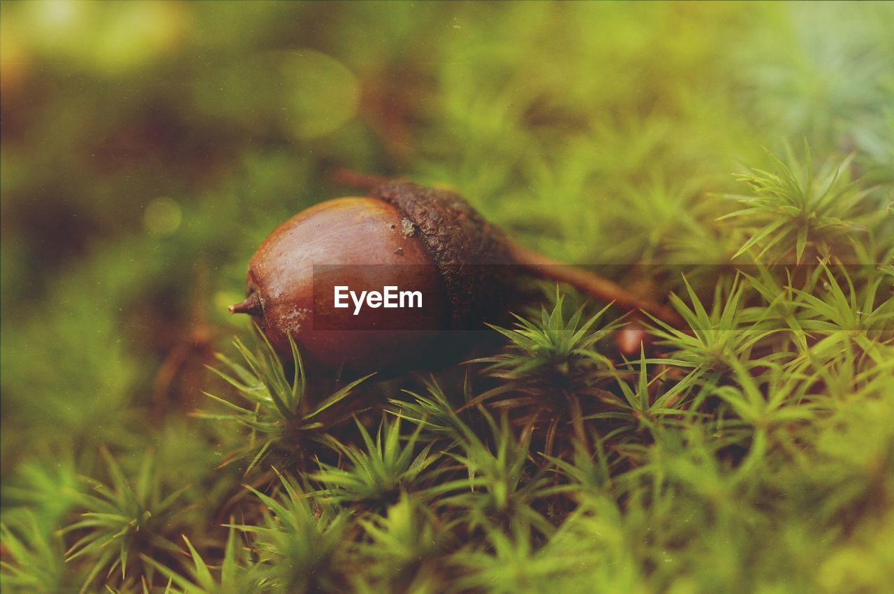 plant, selective focus, close-up, mollusk, nature, gastropod, no people, green color, day, one animal, growth, animal wildlife, invertebrate, animal, animals in the wild, snail, land, field, animal themes, grass