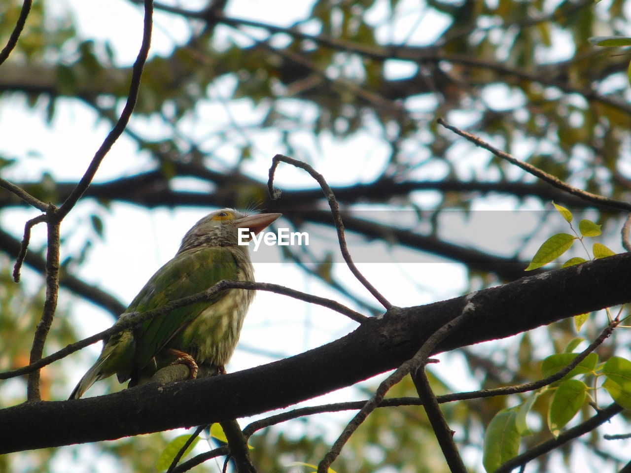 bird, perching, vertebrate, animal themes, animal, branch, one animal, animal wildlife, animals in the wild, tree, plant, low angle view, focus on foreground, no people, day, nature, outdoors, twig, close-up, sky