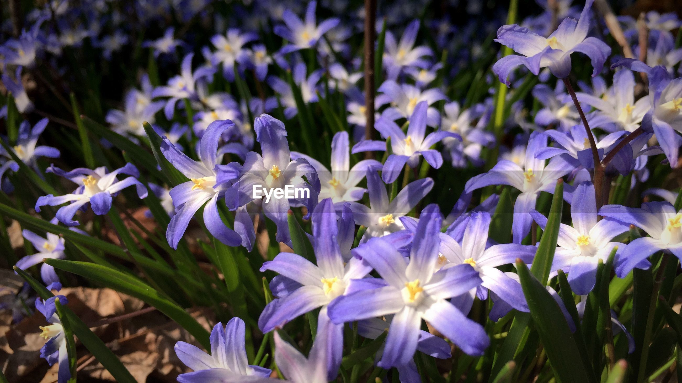 Close up of purple flowers in bloom