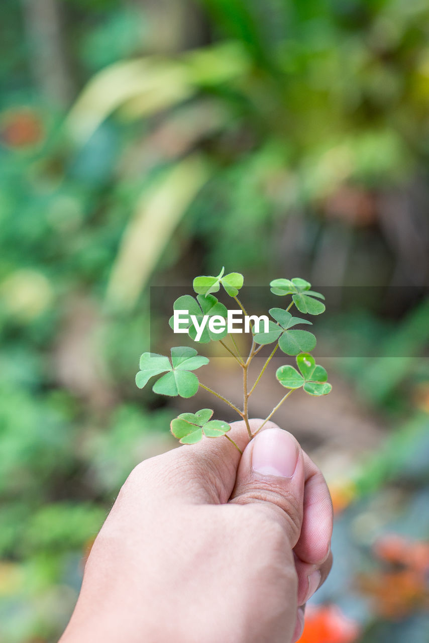 human hand, hand, human body part, real people, holding, one person, plant part, leaf, plant, focus on foreground, personal perspective, body part, finger, human finger, green color, unrecognizable person, lifestyles, nature, day, outdoors, clover, human limb