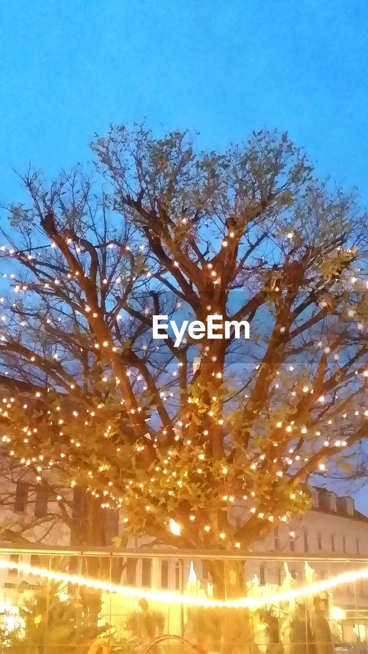 illuminated, tree, night, outdoors, no people, sky, built structure, bare tree, building exterior, architecture, nature, low angle view, christmas lights, clear sky, branch, city