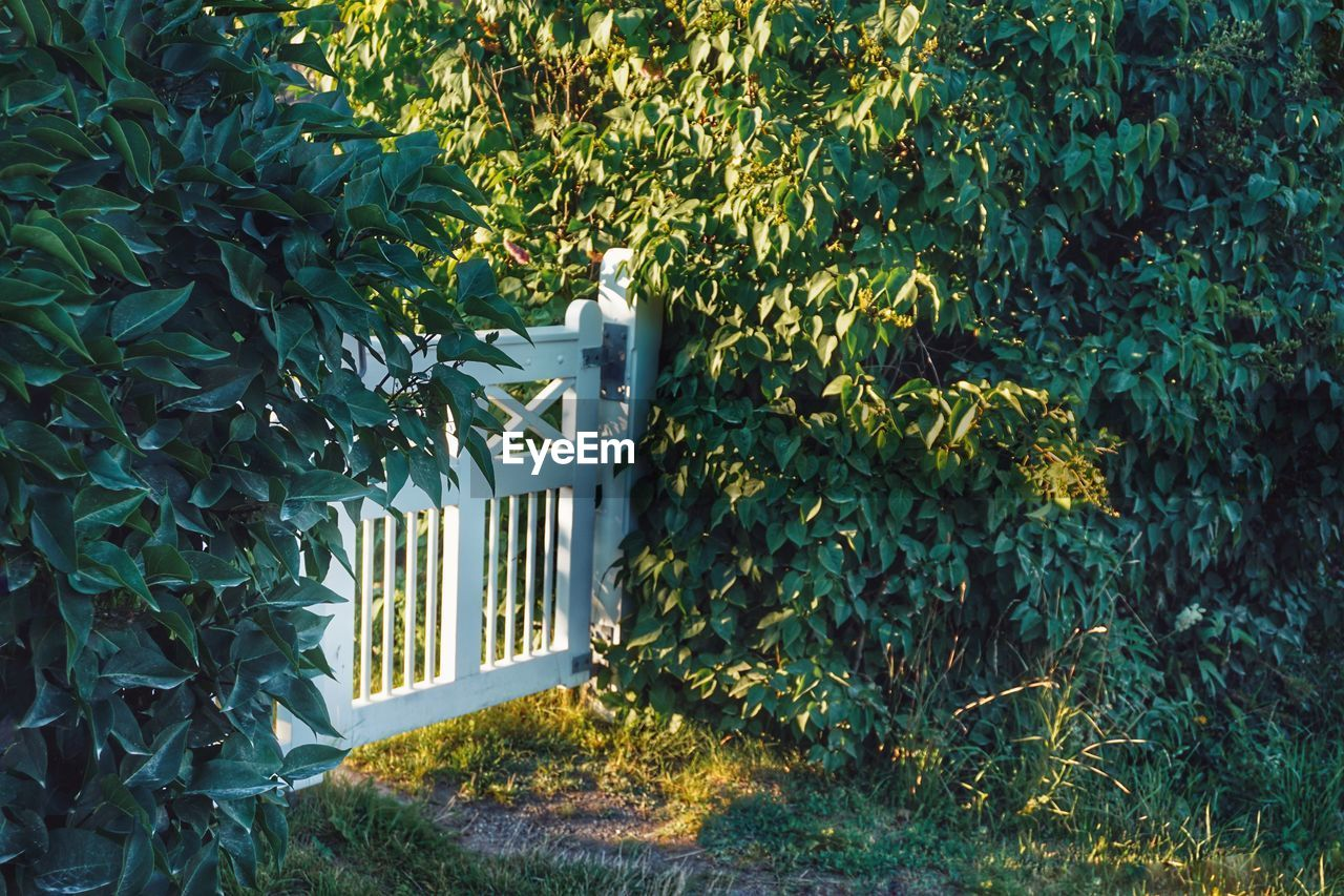 plant, growth, nature, leaf, plant part, green color, tree, day, no people, outdoors, beauty in nature, architecture, ivy, barrier, gate, entrance, fence, boundary, front or back yard, field, hedge