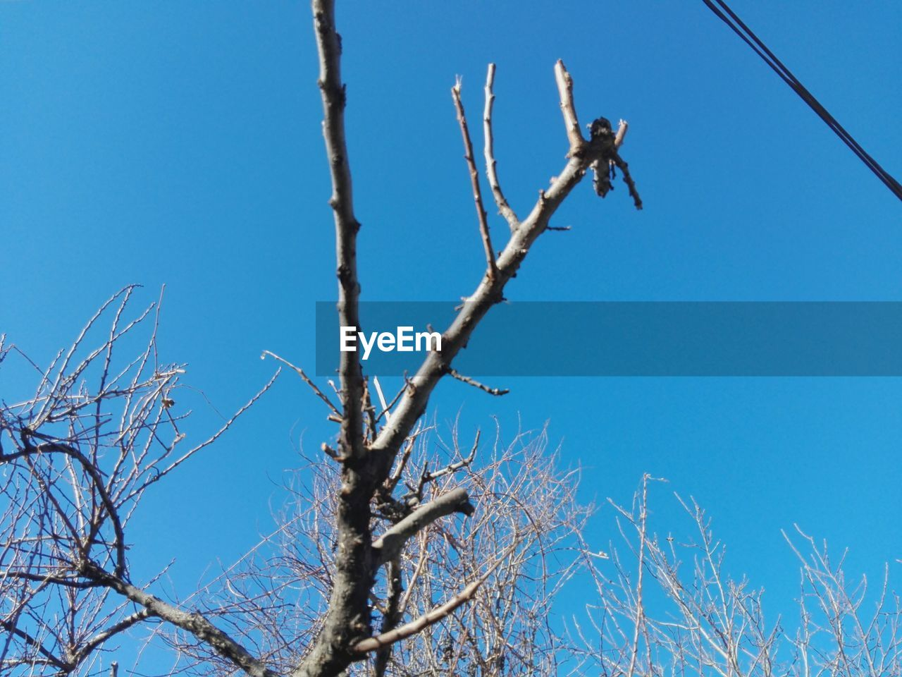 clear sky, low angle view, blue, branch, day, bare tree, animals in the wild, outdoors, nature, tree, perching, animal themes, no people, one animal, sky, full length, beauty in nature, bird