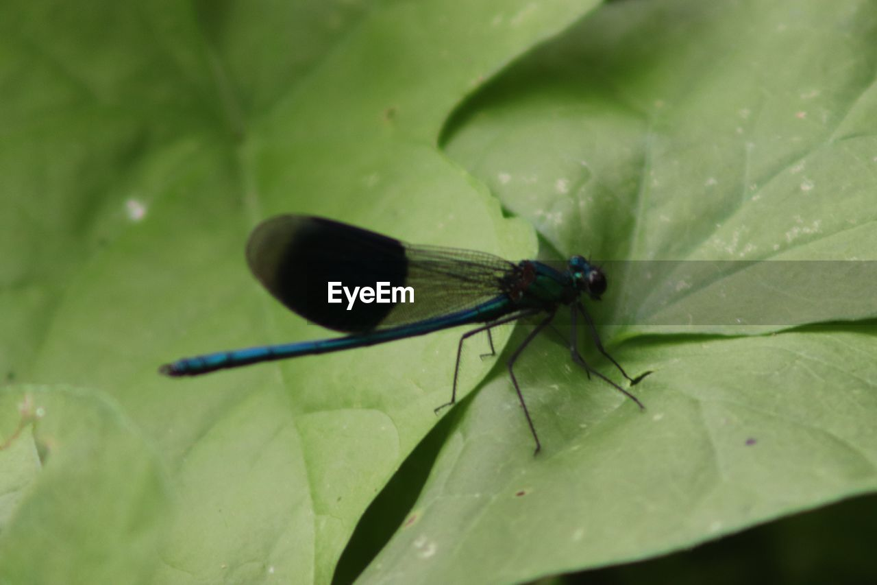 invertebrate, insect, animal wildlife, plant part, animal themes, animals in the wild, leaf, animal, one animal, green color, animal wing, close-up, nature, no people, day, plant, damselfly, selective focus, beauty in nature, growth, outdoors