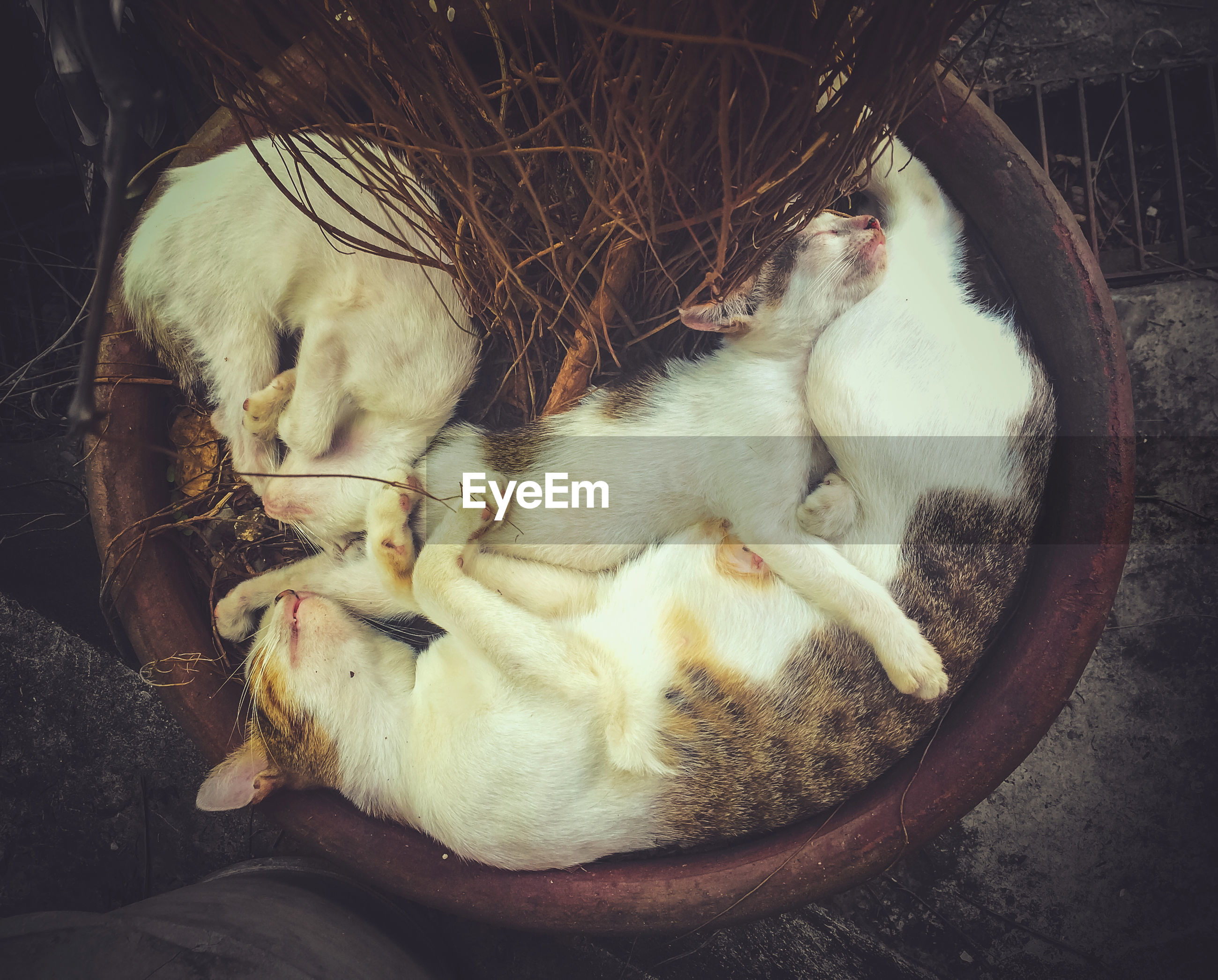 Directly above shot of cats sleeping in container