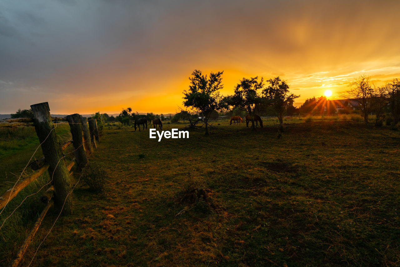 sky, sunset, plant, scenics - nature, beauty in nature, environment, land, tranquil scene, tranquility, tree, landscape, orange color, field, grass, nature, cloud - sky, non-urban scene, idyllic, sun, no people, outdoors