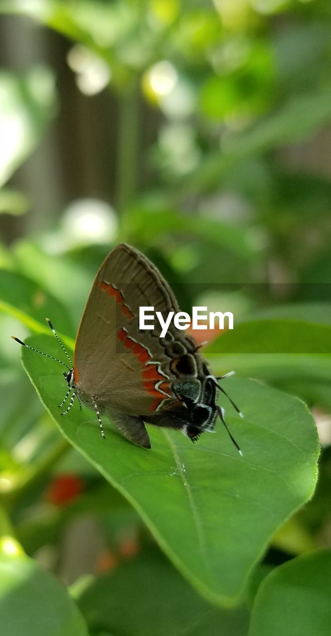 invertebrate, insect, animal themes, animal wildlife, animals in the wild, animal, plant part, one animal, leaf, green color, animal wing, plant, close-up, beauty in nature, nature, day, focus on foreground, no people, outdoors, selective focus, butterfly - insect, butterfly