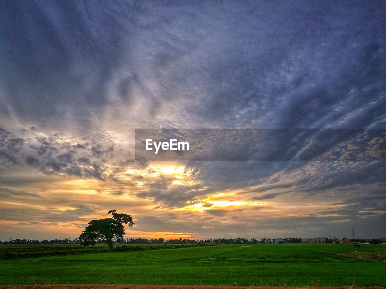 field, sunset, cloud - sky, sky, nature, farm, beauty in nature, landscape, agriculture, scenics, rural scene, tranquility, grass, tranquil scene, outdoors, real people, rice paddy, growth, men, tree, one person, day, people
